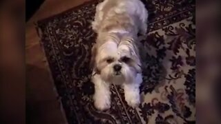 Dog Knows A Bunch of Tricks!