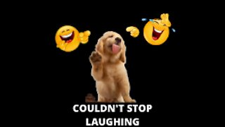 Funny Dog tries out trending filter😄😄#funny