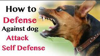 Dog Attack How to Defend Yourself