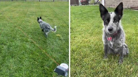 Sprightly pup has the time of her life with creative dog toy