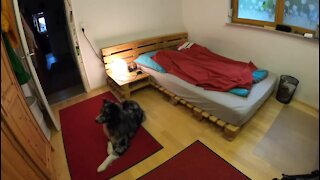 You won't believe what this dog does after his owner leaves