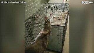 Questo cagnolino ama complicarsi la vita