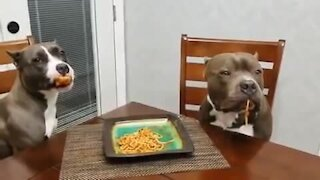 Funny dogs innocently stare at owner after getting caught in the act