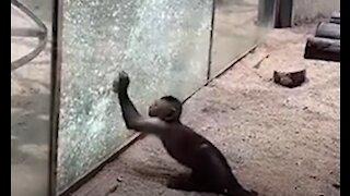 Genius Animals That Will Amaze You