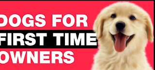 10 best dogs for first owners to have