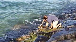 Man rescues turtle caught between rocks