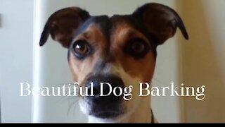 Beautiful Dog Barking