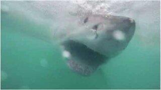 A shark's teeth like you've never seen before!