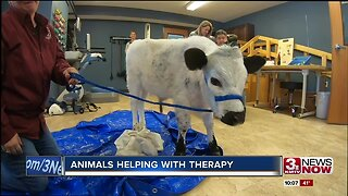 Animals Helping with Therapy