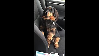 Dachshund begs for treats is cutest possible way