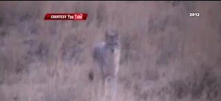 Clark County commissioners consider banning varmint hunts