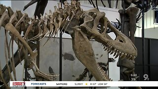 Check out dinosaur fossils at gem show