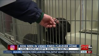 Dog seen in video finds fur-ever home
