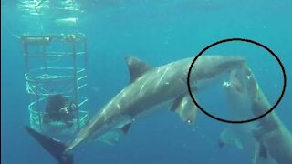 5 People who survived shark attacks