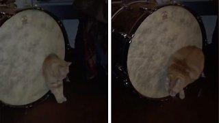 Fat bass: Bizarre moment chubby cat can't squeeze through bass drum