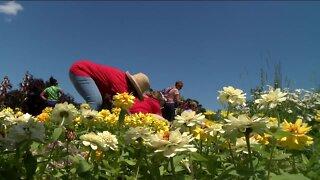 Hundreds line community garden for free flowers