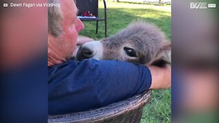 Adorable moment man sings lullaby to donkey