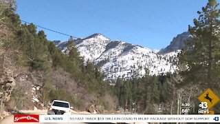Busy day at Mount Charleston
