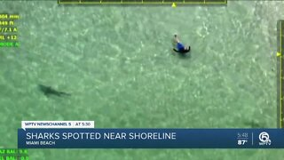 Sharks spotted off Miami Beach