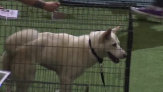 Animal Foundation host 15th annual Best in Show