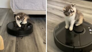 Adorable little kitten preciously plays with robot vacuum
