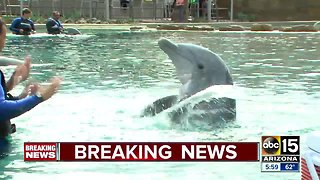 Dolphinaris temporarily closing