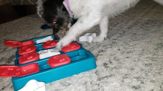 Fast-learning dog solves puzzle to get her treats