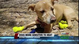 Dogs suffer when people underestimate heat