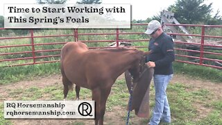 Time to Start Working with This Spring's Foals