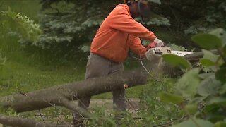 Local tree services facing staffing shortages, struggle with high demand after strong winds