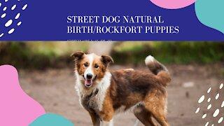 Street Dog Natural Birth/Rockfort puppies