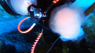 Scuba diver ridiculously photobombs epic lobster video