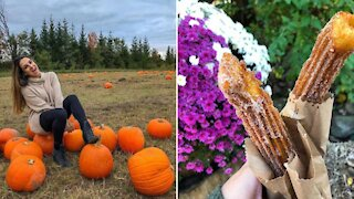 You Can Get Apple Cinnamon Churros At An Adorable Ontario Pumpkin Patch This Fall