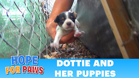 Homeless mom gives birth to three puppies on a college campus. Please share.