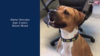 FOX Finder Pet Finder - Meet Hercules
