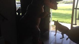 Little Girl Scared Her Dog With A Dinosaur Costume