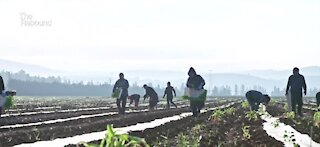 Migrant farmers hit hard in terms of education