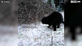 Katten er livredd for snø!