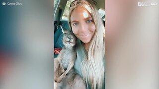 Un kangourou orphelin trouve enfin une famille !