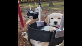 Cute puppies playing time