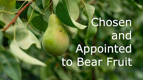 Chosen and Appointed to Bear Fruit - John 15:9-17 - 6th Sunday of Easter