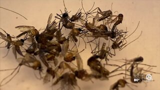 St. Lucie County using technology to fight mosquitoes