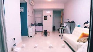 Woman's epic home workout with toilet paper