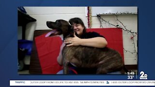 Poe the dog is looking for a new home at the Humane Society of Harford County