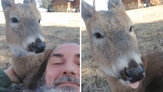 Farmer hangs out with his deer best friend