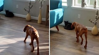 Hilarious Moment Dog 'Preys' On Cat Only To End Up Cuddling Him