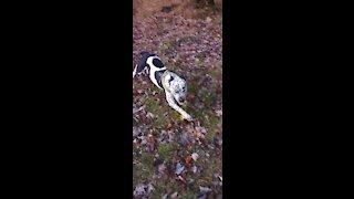 Dogs playing enjoying life