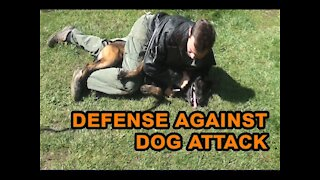 How to defend against a dog. Common self defense techniques.