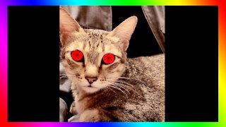 Uchiha Cat | BDIY Cool Trick