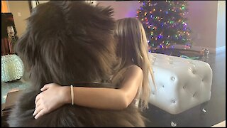 Little girl hugs her huge Newfoundland dog